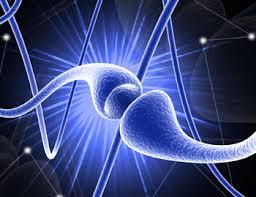 flordelis neurofeedback